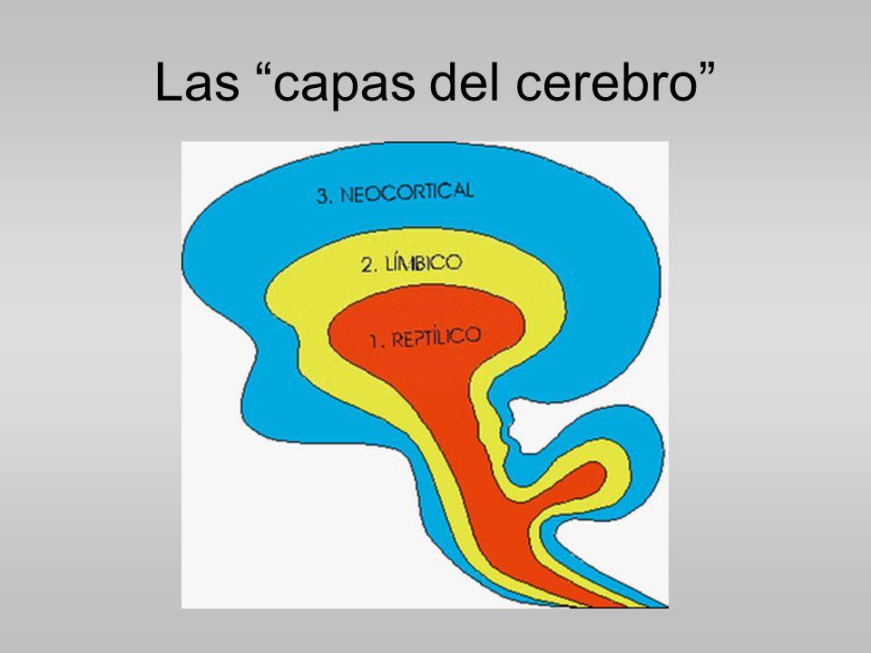 Las capas del cerebro