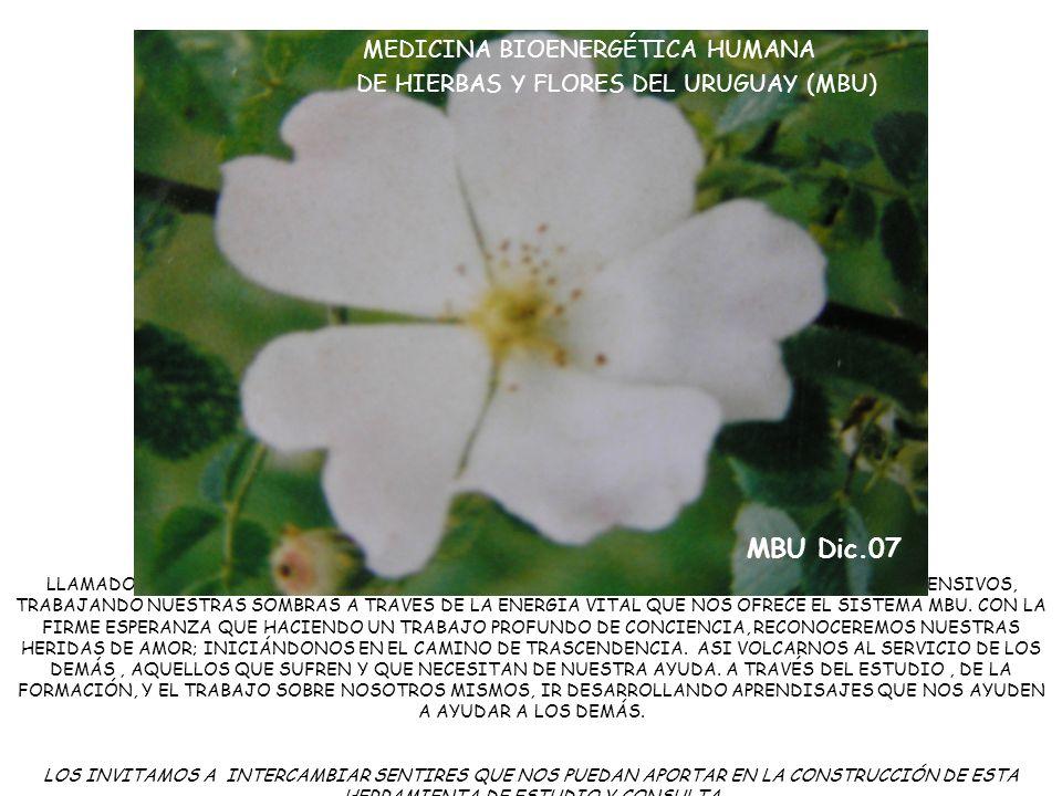 MBU Dic.07 MEDICINA BIOENERGÉTICA HUMANA