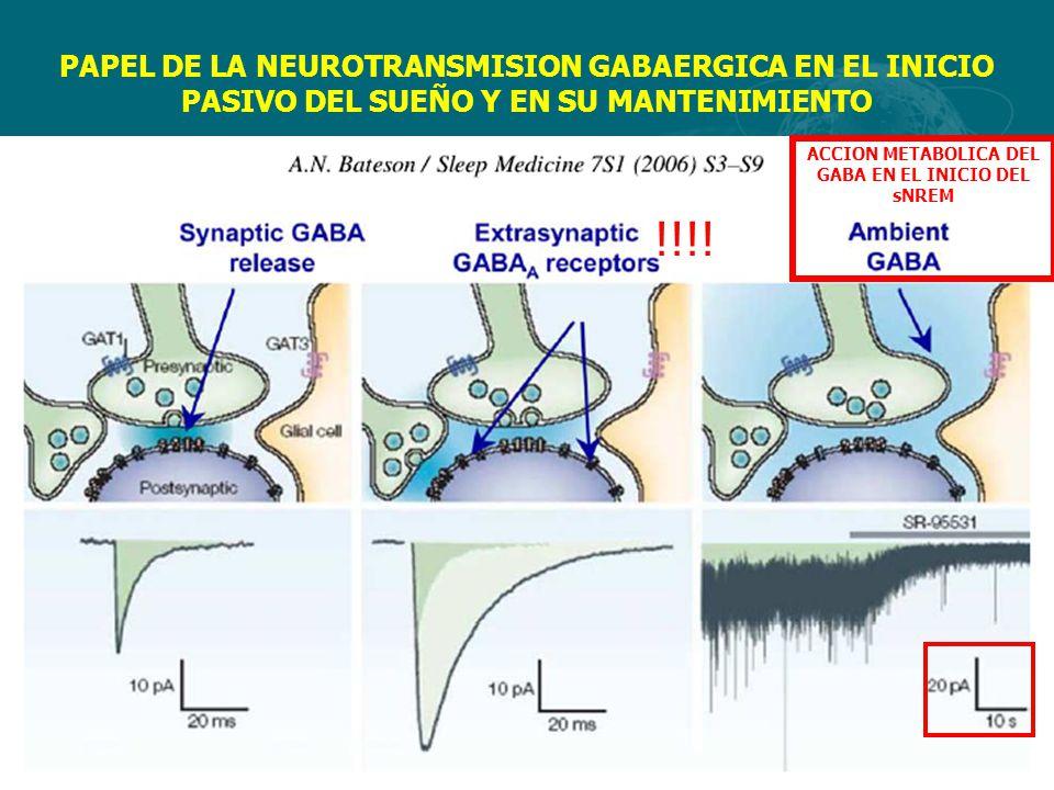 ACCION METABOLICA DEL GABA EN EL INICIO DEL sNREM