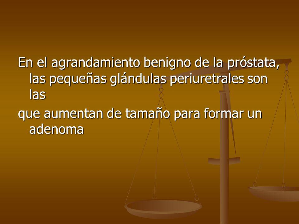 En el agrandamiento benigno de la próstata, las pequeñas glándulas periuretrales son las