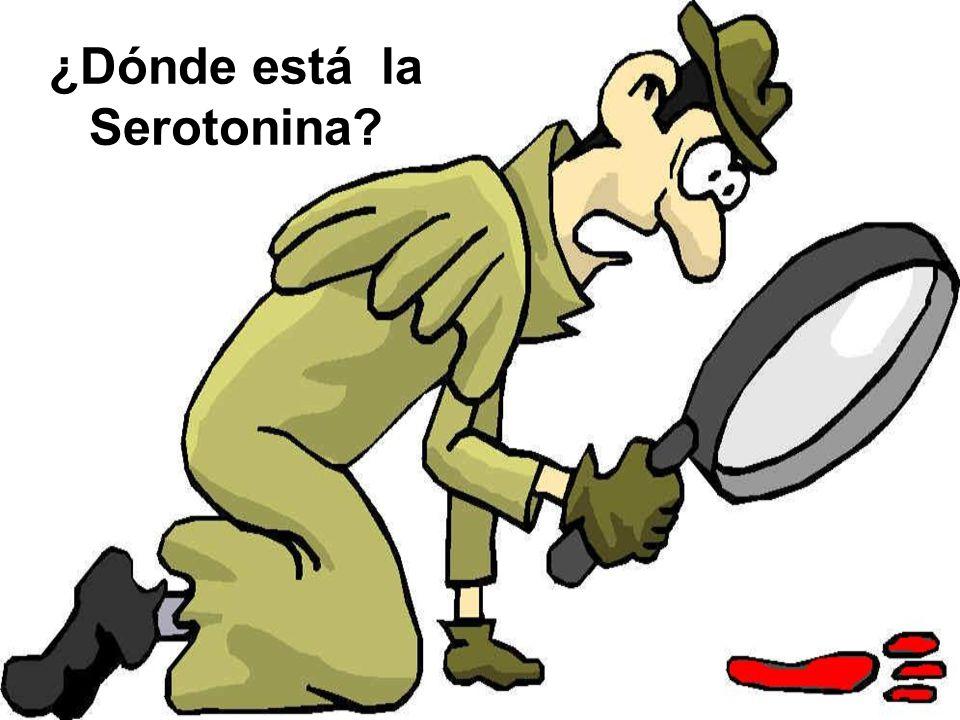 ¿Dónde está la Serotonina