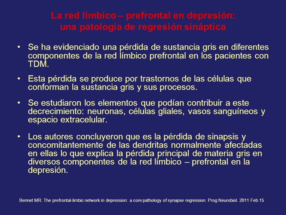 La red límbico – prefrontal en depresión: una patología de regresión sináptica