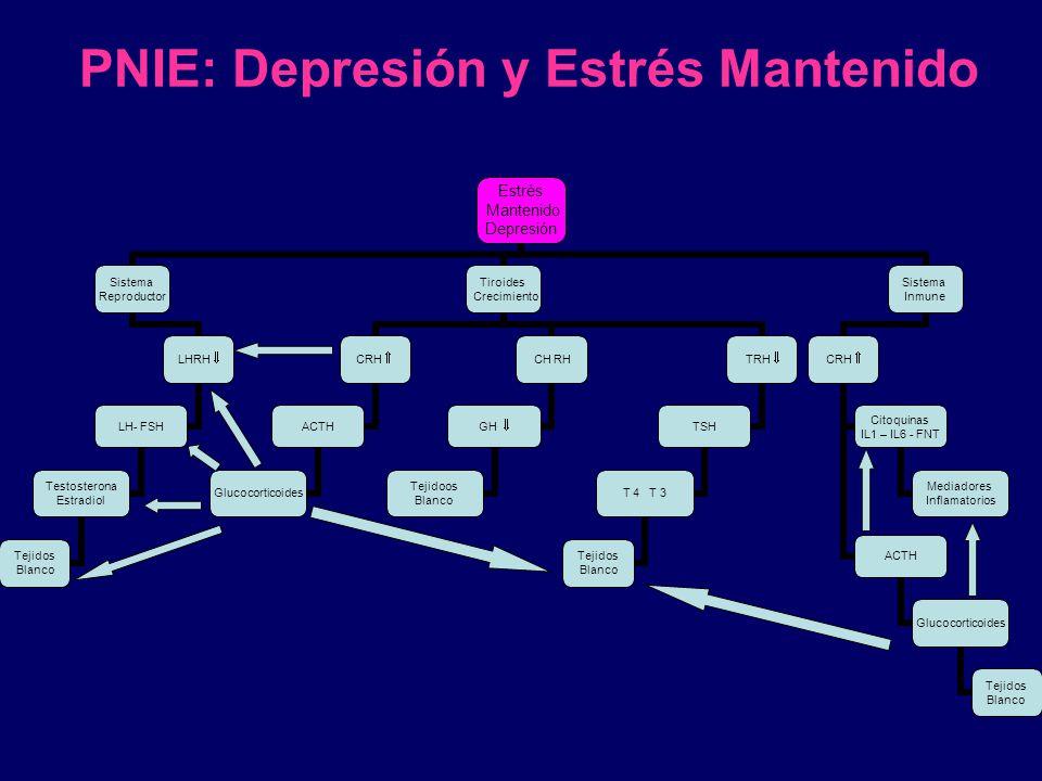 PNIE: Depresión y Estrés Mantenido