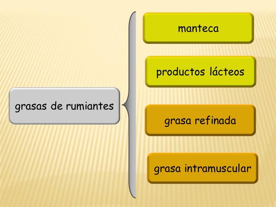 manteca productos lácteos grasas de rumiantes grasa refinada grasa intramuscular