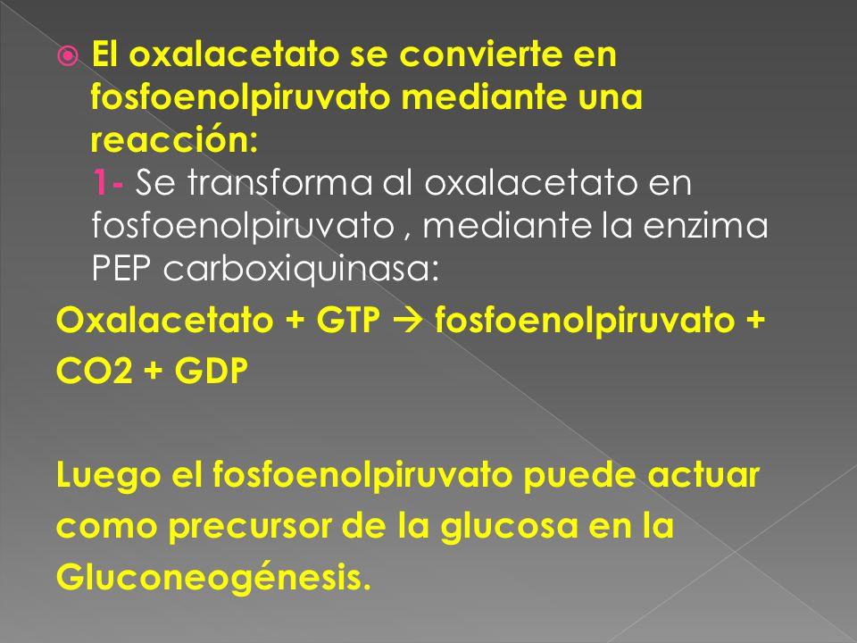 El oxalacetato se convierte en fosfoenolpiruvato mediante una reacción: 1- Se transforma al oxalacetato en fosfoenolpiruvato , mediante la enzima PEP carboxiquinasa: