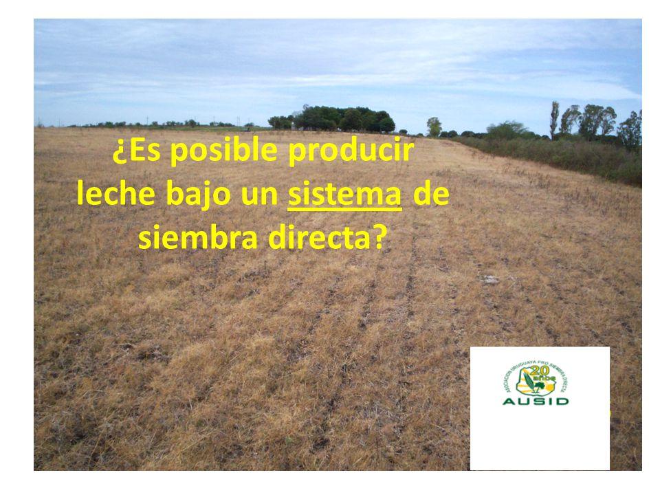 ¿Es posible producir leche bajo un sistema de siembra directa