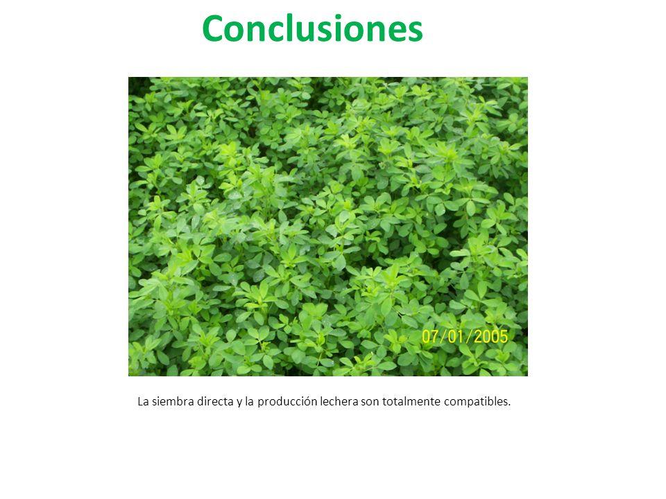 Conclusiones La siembra directa y la producción lechera son totalmente compatibles.