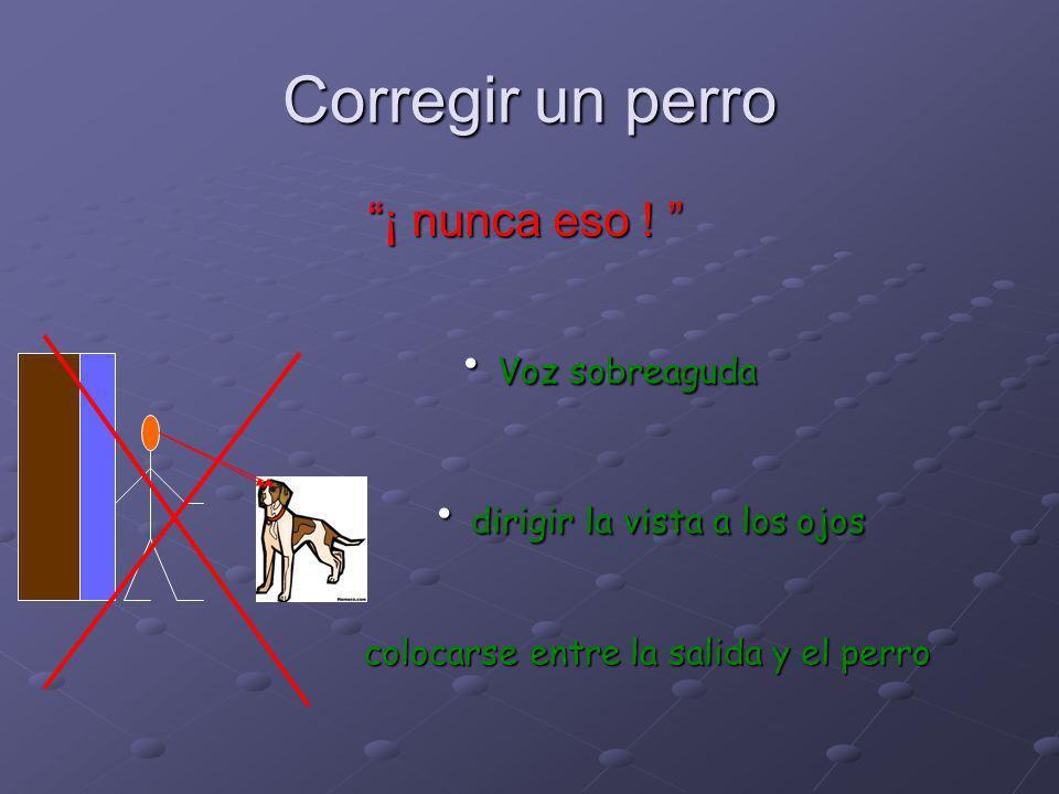 Corregir un perro Voz sobreaguda dirigir la vista a los ojos