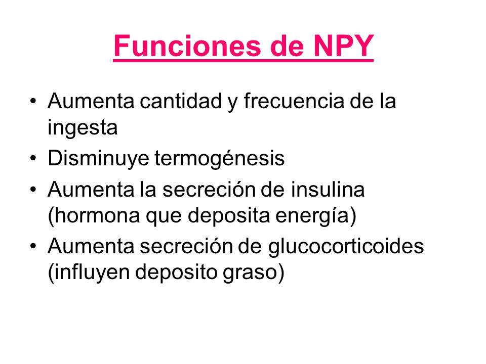 Funciones de NPY Aumenta cantidad y frecuencia de la ingesta