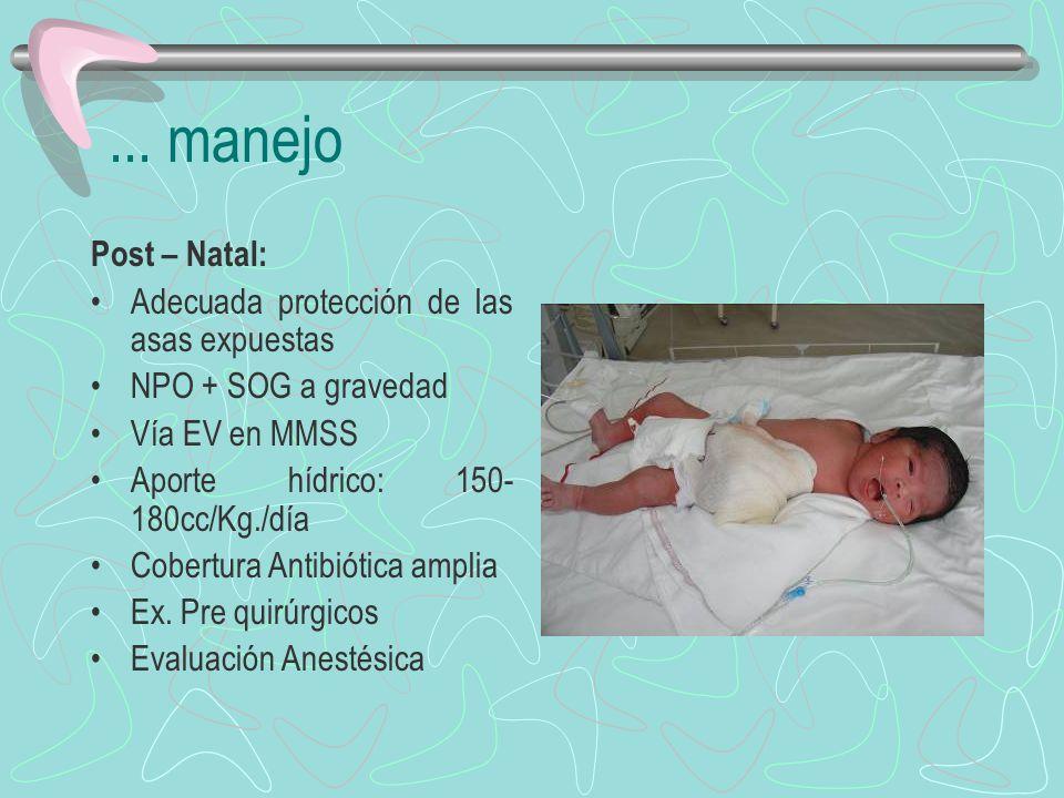 ... manejo Post – Natal: Adecuada protección de las asas expuestas