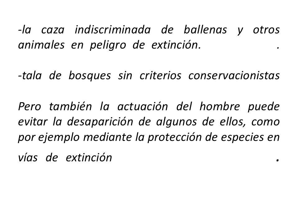 -la caza indiscriminada de ballenas y otros animales en peligro de extinción.