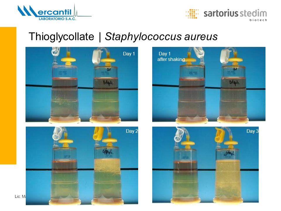 Thioglycollate | Staphylococcus aureus