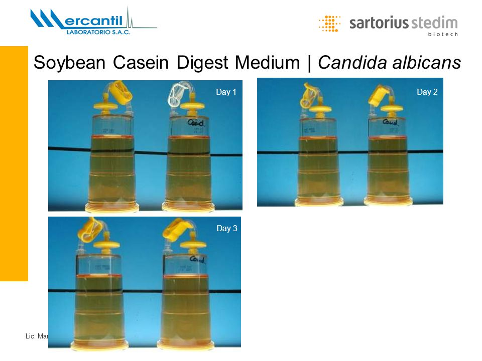 Soybean Casein Digest Medium | Candida albicans