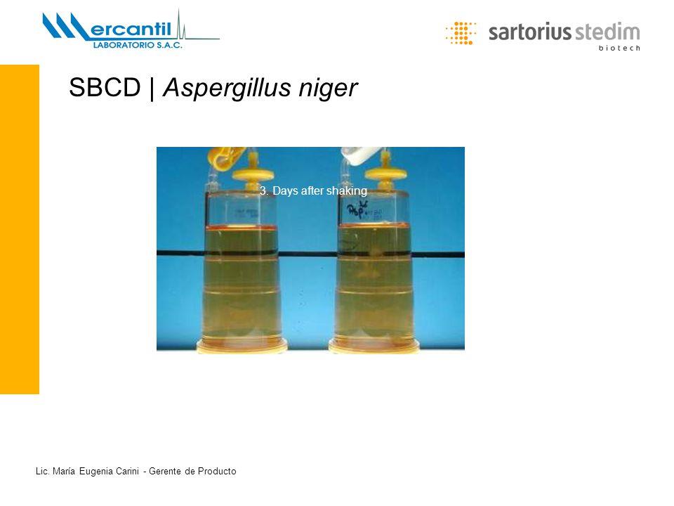 SBCD | Aspergillus niger