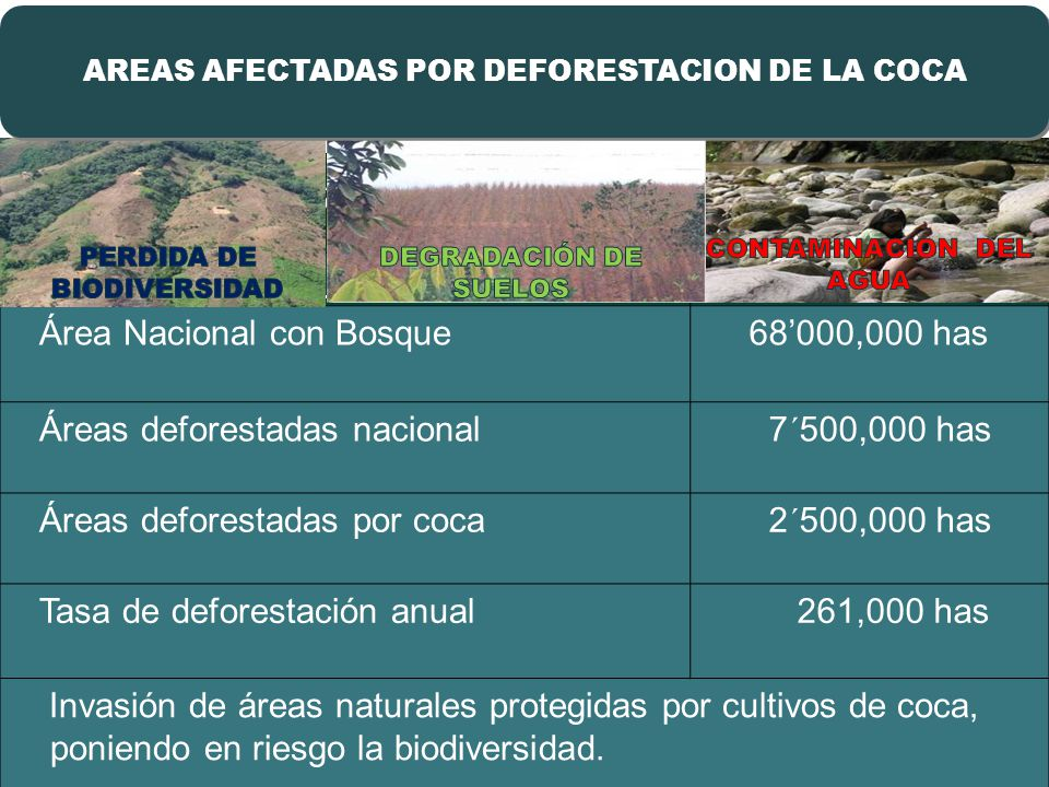 Deforestación por Coca afecta la Amazonía