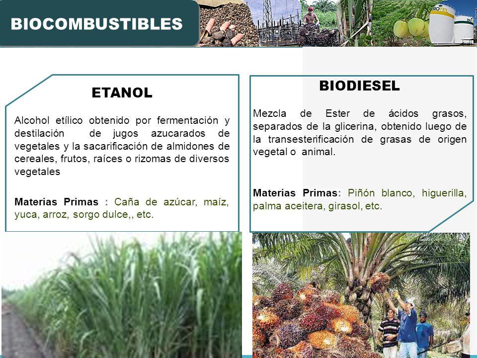BIOCOMBUSTIBLES BIODIESEL ETANOL