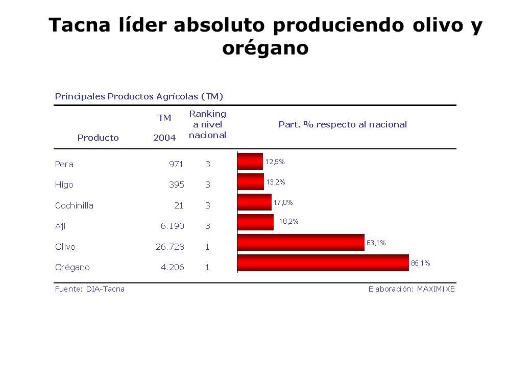 Tacna líder absoluto produciendo olivo y orégano