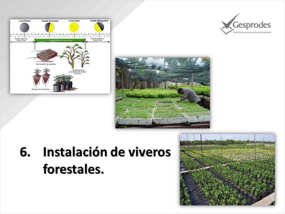 Instalación de viveros forestales.