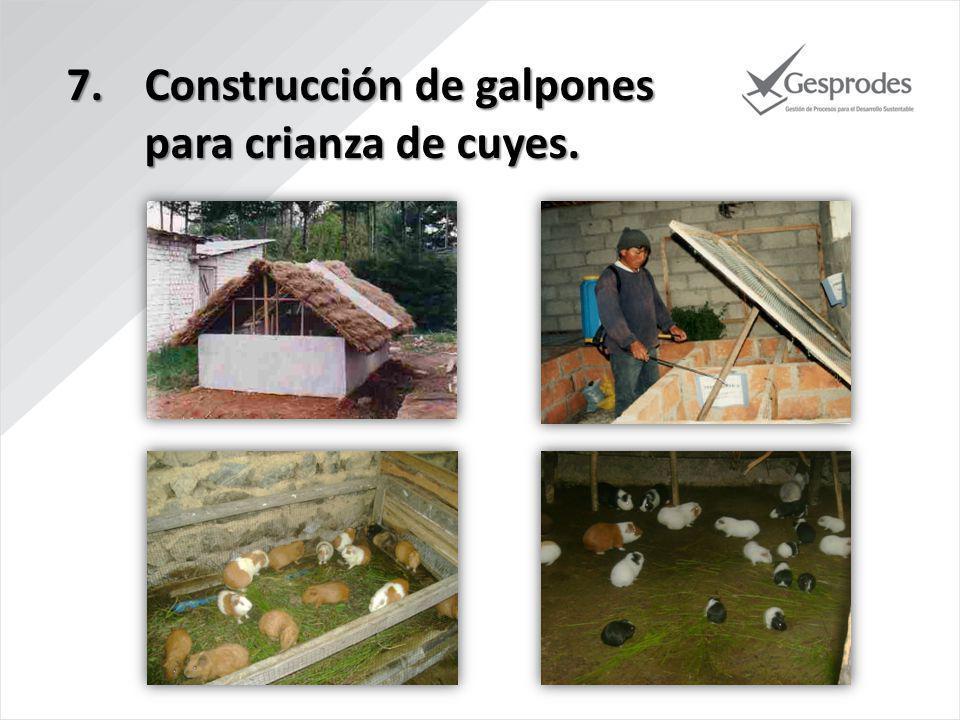 Construcción de galpones para crianza de cuyes.