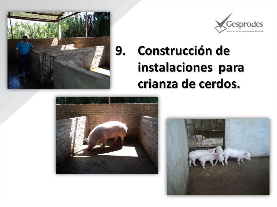 Construcción de instalaciones para crianza de cerdos.