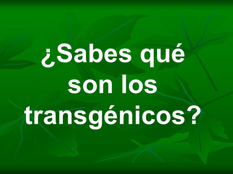 ¿Sabes qué son los transgénicos