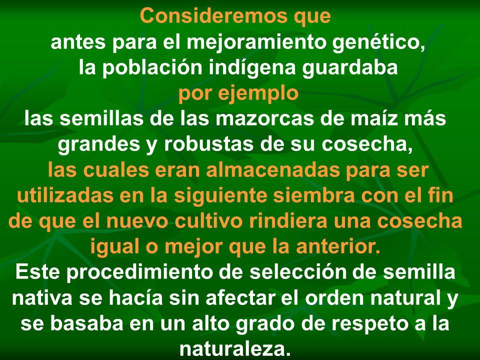 antes para el mejoramiento genético, la población indígena guardaba