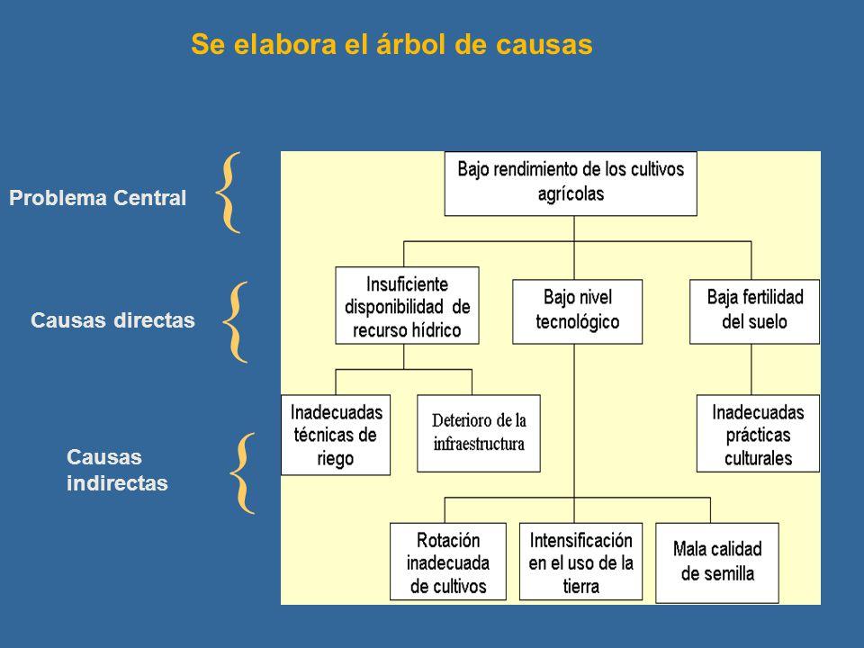 Se elabora el árbol de causas