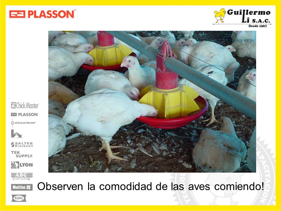 Observen la comodidad de las aves comiendo!