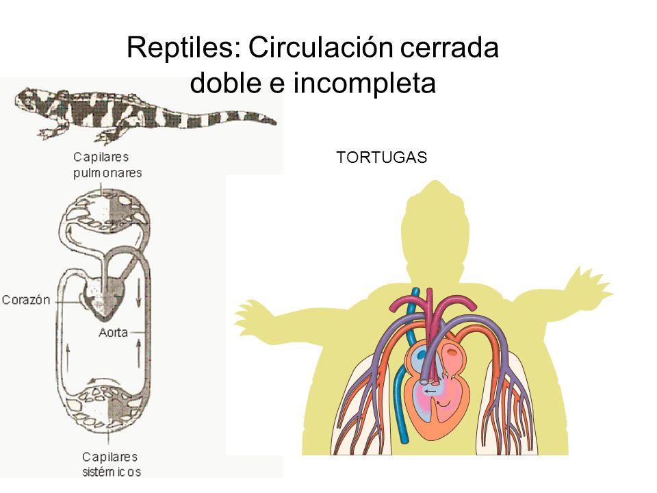 Reptiles: Circulación cerrada doble e incompleta