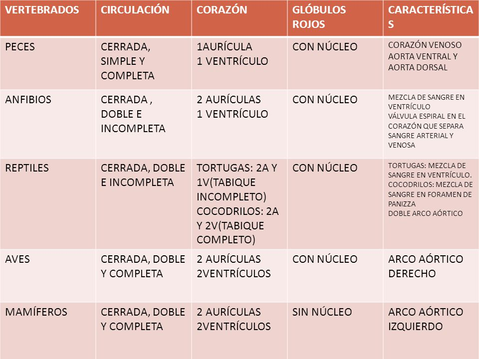 CERRADA, SIMPLE Y COMPLETA 1AURÍCULA 1 VENTRÍCULO CON NÚCLEO