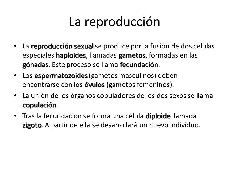 La reproducción