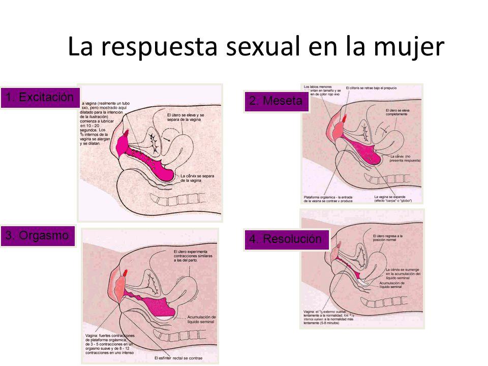 La respuesta sexual en la mujer