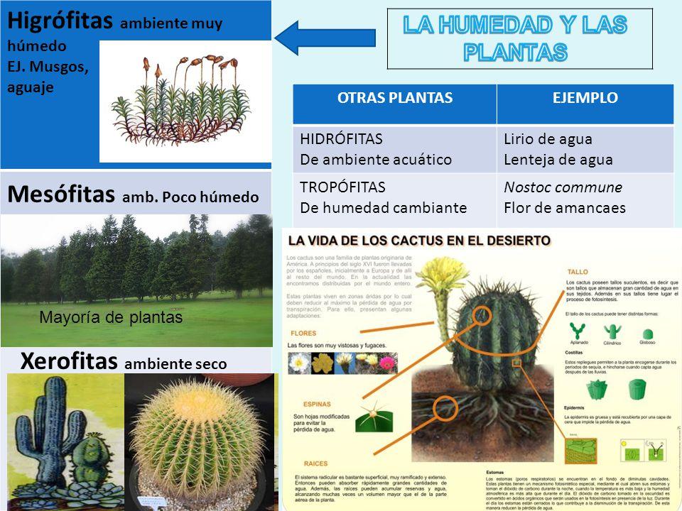 LA HUMEDAD Y LAS PLANTAS