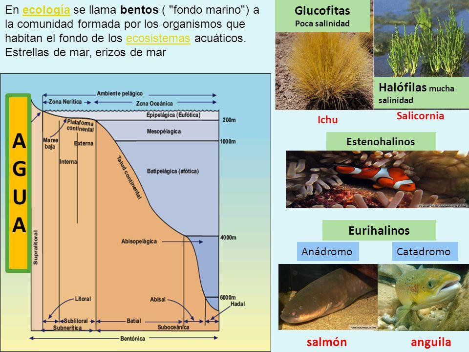 A G U Glucofitas Halófilas mucha salinidad Eurihalinos salmón anguila
