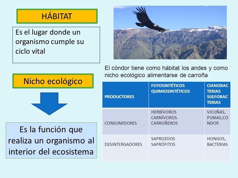 Es la función que realiza un organismo al interior del ecosistema