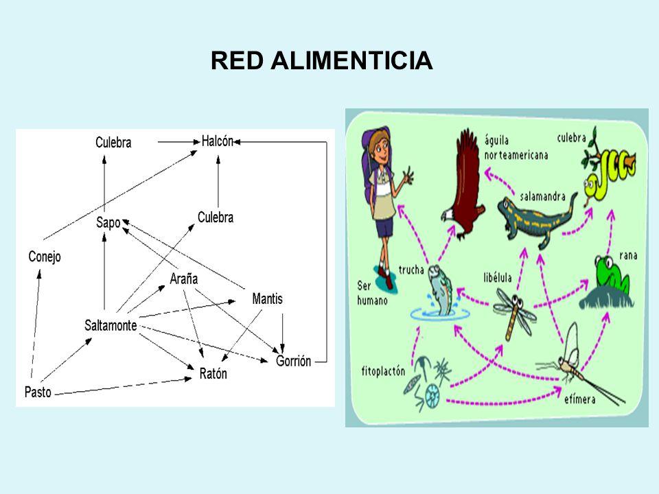 RED ALIMENTICIA