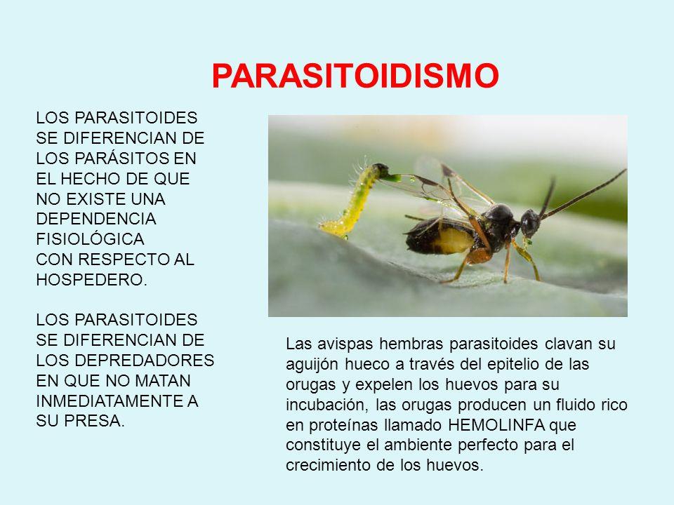 PARASITOIDISMO LOS PARASITOIDES SE DIFERENCIAN DE LOS PARÁSITOS EN EL HECHO DE QUE NO EXISTE UNA DEPENDENCIA FISIOLÓGICA.