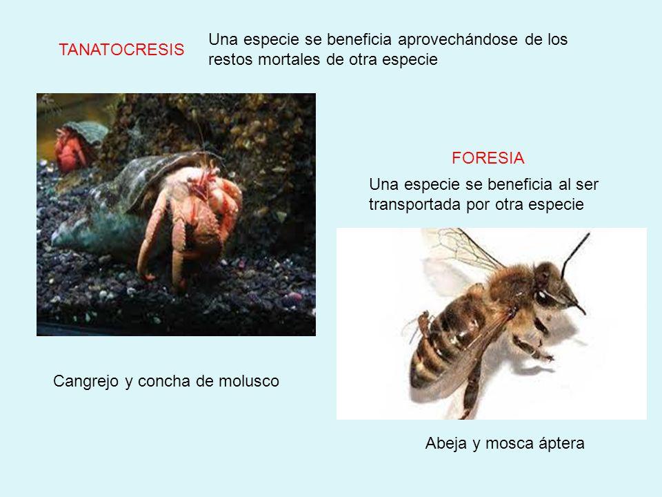 Una especie se beneficia aprovechándose de los restos mortales de otra especie