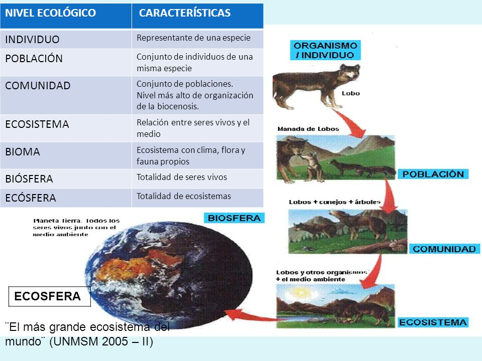 ¨El más grande ecosistema del mundo¨ (UNMSM 2005 – II)