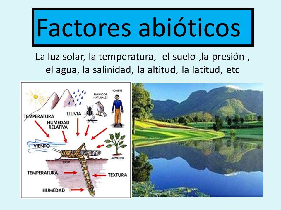 Factores abióticos La luz solar, la temperatura, el suelo ,la presión , el agua, la salinidad, la altitud, la latitud, etc.