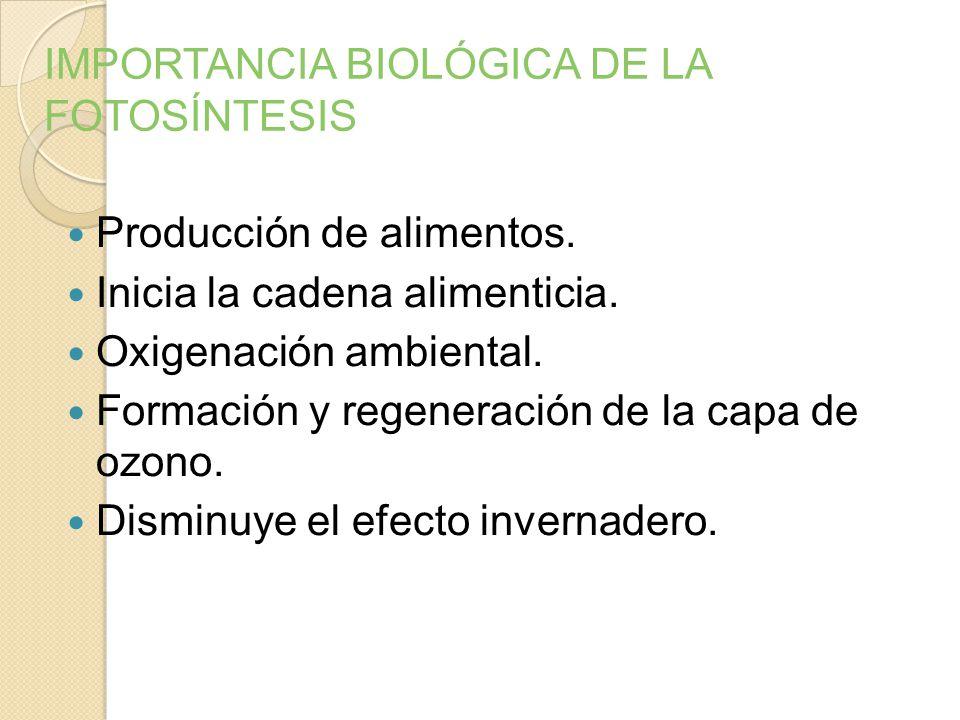 IMPORTANCIA BIOLÓGICA DE LA FOTOSÍNTESIS