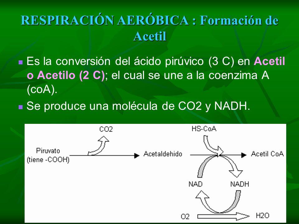 RESPIRACIÓN AERÓBICA : Formación de Acetil