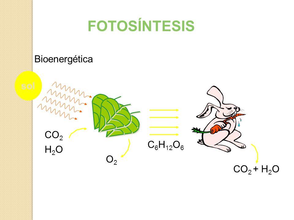 FOTOSÍNTESIS Bioenergética sol CO2 C6H12O6 H2O O2 CO2 + H2O
