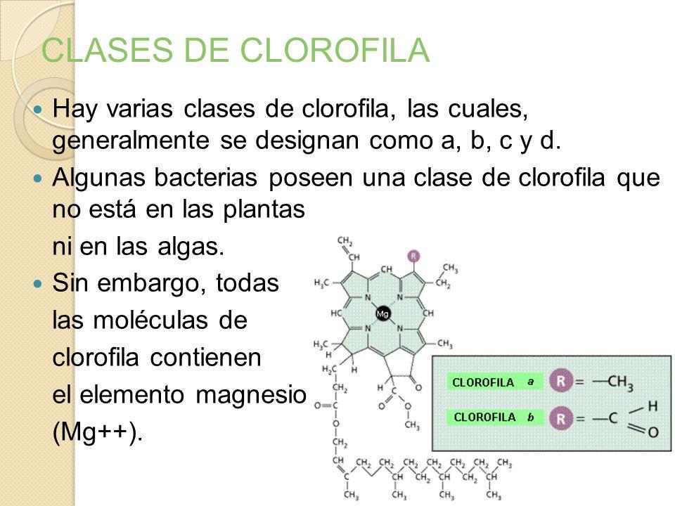 CLASES DE CLOROFILA Hay varias clases de clorofila, las cuales, generalmente se designan como a, b, c y d.