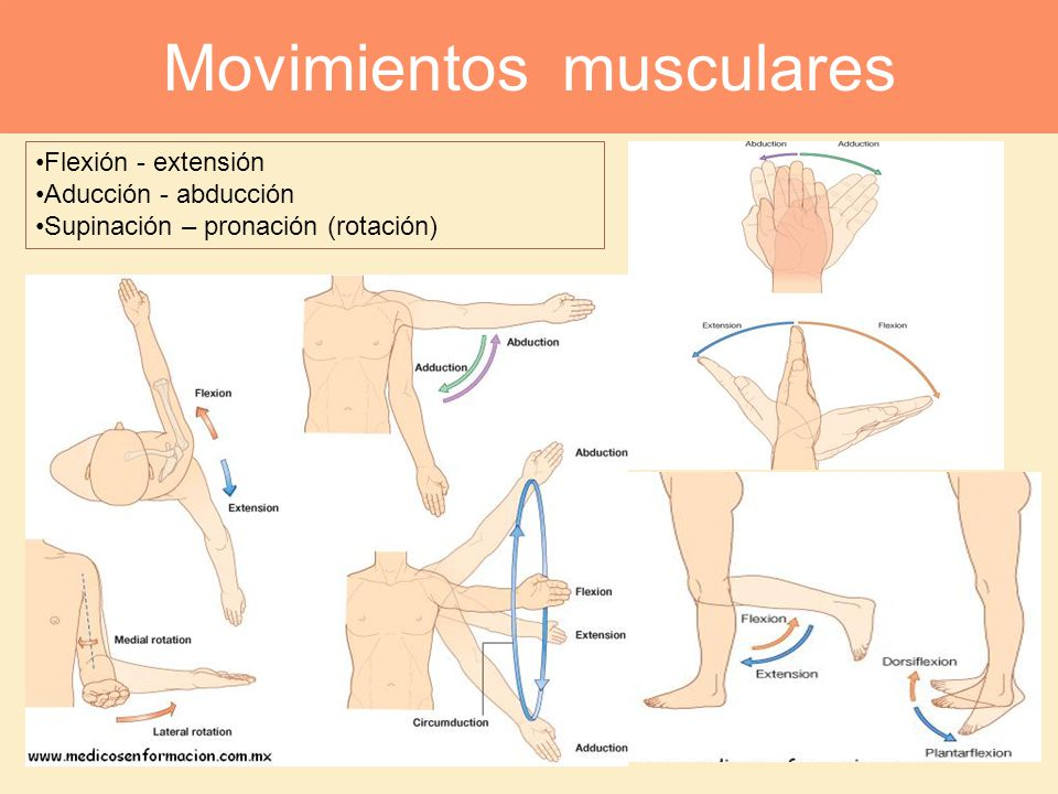 Movimientos musculares