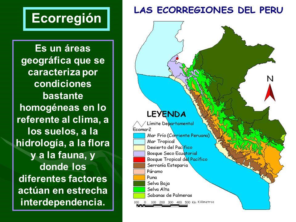Ecorregión