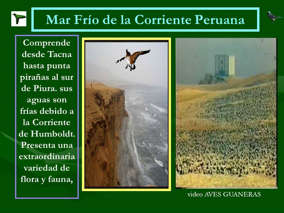 Mar Frío de la Corriente Peruana