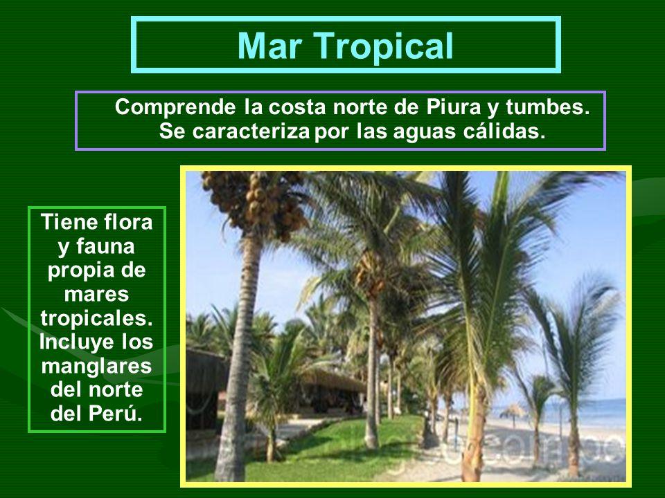Mar Tropical Comprende la costa norte de Piura y tumbes. Se caracteriza por las aguas cálidas.