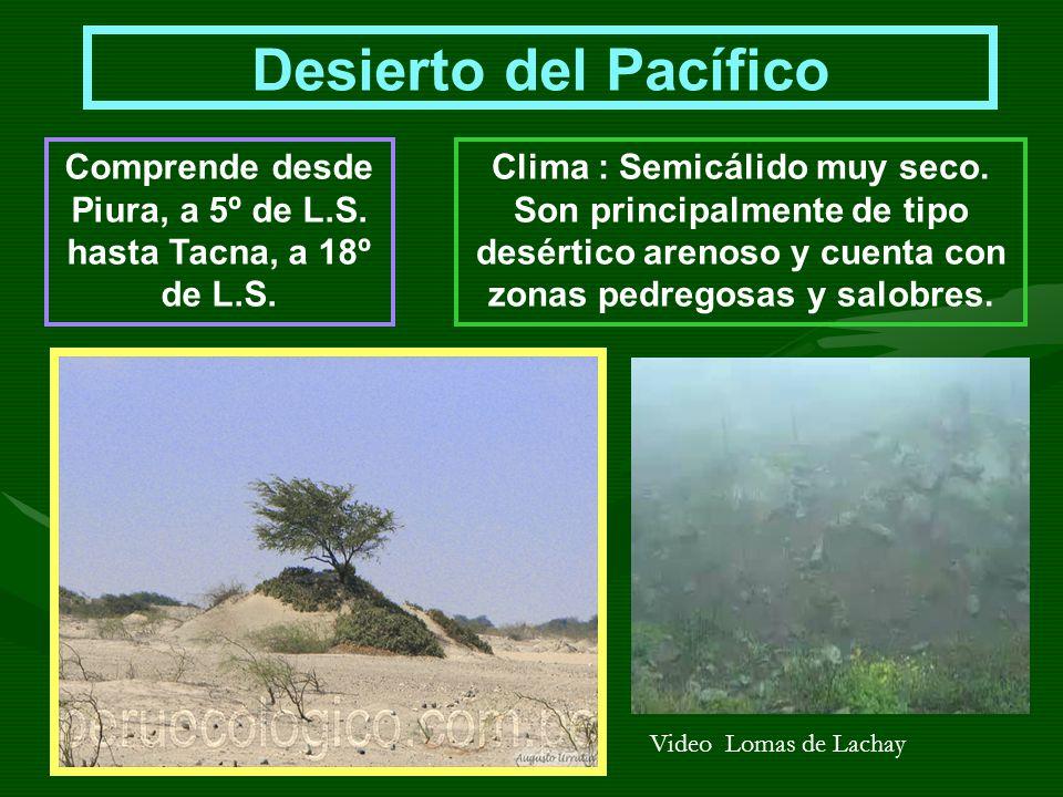 Comprende desde Piura, a 5º de L.S. hasta Tacna, a 18º de L.S.