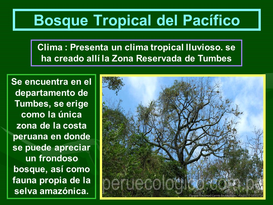 Bosque Tropical del Pacífico